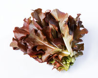 Kopfsalat, rot Stockfoto