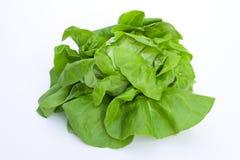 Kopfsalat - Salat Stockfoto