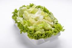 Kopfsalat-Salat Lizenzfreies Stockbild