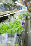 Kopfsalat am Supermarkt Stockbild