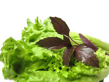 Kopfsalat und Basilikum lizenzfreie stockfotos