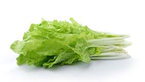 Kopfsalatblätter lokalisiert auf weißem Hintergrund Stockbild