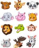 Kopfsammlung des wilden Tieres der Karikatur Lizenzfreie Stockbilder