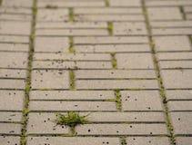 Kopfstein, der Fußweg mit einem Bündel Gras, konkrete Kopfsteine pflastert Beschaffenheit des alten Steinweges Stockfotografie
