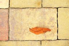 Kopfstein, der Fußweg mit trockenen bunten Blättern des Herbstes, konkrete Kopfsteine pflastert Stockfotografie