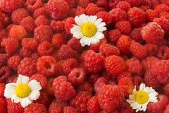 kophoogtepunt van rode framboos bessen tegen koude Kamillebloemen stock afbeelding
