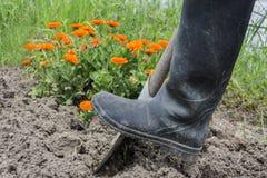 Kopiąca wiosny ziemia z łopatą zdjęcie royalty free