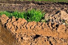 Kopiący up zielona trawa i ziemia fotografia stock