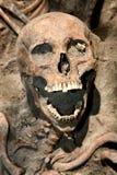 Kopiący up czaszka Obrazy Stock