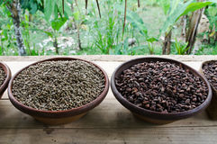 Kopi luwak Royalty Free Stock Photos