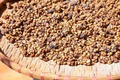 Kopi Luwak coffee beans Royalty Free Stock Images