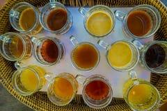 Kopi Luwak herbaty i kawy testowanie w Bali wyspie w Indonezja, nad widok Obraz Royalty Free
