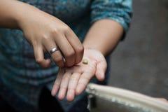 Kopi luwak kawa Fotografia Royalty Free
