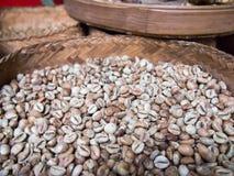 Kopi Luwak kawowa fasola przy Bali Indonezja Luwak kawa jest m Obrazy Stock