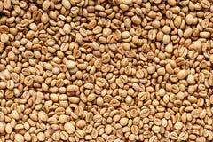 Kopi Luwak lub cybet kawa Obraz Stock
