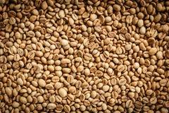 Kopi Luwak lub cybet kawa Obrazy Royalty Free