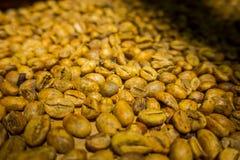 Kopi luwak lub cybet kawa, jesteśmy jeden światowy ` s drogich i produkci najwięcej rozmaitość kawa Zdjęcie Stock