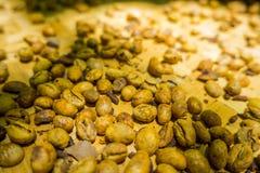 Kopi luwak lub cybet kawa, jesteśmy jeden światowy ` s drogich i produkci najwięcej rozmaitość kawa Obrazy Stock