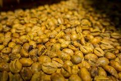 Kopi luwak lub cybet kawa, jesteśmy jeden światowy ` s drogich i produkci najwięcej rozmaitość kawa Obraz Royalty Free