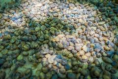 Kopi luwak lub cybet kawa, jesteśmy jeden światowy ` s drogich i produkci najwięcej rozmaitość kawa Zdjęcia Stock