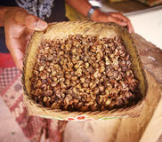 Kopi luwak. Is one of the world's most expensive coffee, Bali, Indonesia royalty free stock image
