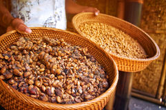 Kopi luwak. Is one of the world's most expensive coffee, Bali, Indonesia royalty free stock photos