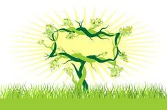 kopie bonsai kosmosie drzewo Zdjęcie Royalty Free