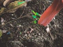Kopie małej młodej rośliny uprawiać ogródek, rydla narzędzie z glebowym backgr Fotografia Royalty Free
