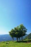 kopiera trees Royaltyfri Foto