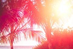 Kopiera utrymme av den tropiska palmträdet för konturn med solljus på abstrakt bakgrund för för solnedgånghimmel och moln Sommars Arkivfoton