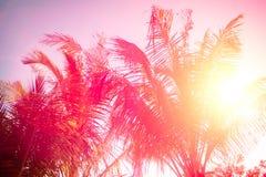 Kopiera utrymme av den tropiska palmträdet för konturn med solljus på abstrakt bakgrund för för solnedgånghimmel och moln Sommars Royaltyfri Bild