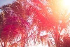 Kopiera utrymme av den tropiska palmträdet för konturn med solljus på abstrakt bakgrund för för solnedgånghimmel och moln Sommars Royaltyfri Foto