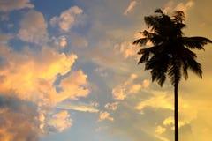 Kopiera utrymme på en solnedgångbakgrund i vändkretsarna med konturn av gömma i handflatan i himlen med många ljusa moln abstrakt Royaltyfria Foton