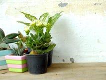 Kopierar naturliga husväxter för stilleben på träbakgrundstextur med utrymme Arkivfoton