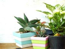 Kopierar naturliga husväxter för stilleben på träbakgrundstextur med utrymme Arkivbilder