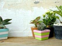 Kopierar naturliga husväxter för stilleben på träbakgrundstextur med utrymme Royaltyfri Bild
