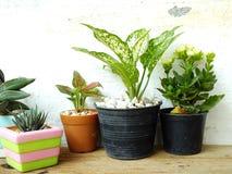 Kopierar naturliga husväxter för stilleben på träbakgrundstextur med utrymme Royaltyfri Foto