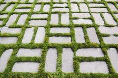 Kopieren Sie mit einem gekeimten Gras IV lizenzfreie stockbilder