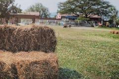 Kopieren Sie Raum und Weichzeichnung am Reisstroh im Bauernhof/im Hintergrund mit Strahlnlicht auf dem Heu, dem grünen Feld, dem  Lizenzfreie Stockfotos