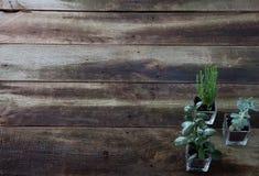 Kopieren Sie Raumtapete für Konzept des Floristentrainings oder -klasse Stockfoto