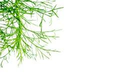 Kopieringsutrymme och gröna växter royaltyfria foton