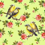 Kopierte weiße Blumenbeschaffenheit mit gezogenen Vögeln in den Rosen Stock Abbildung