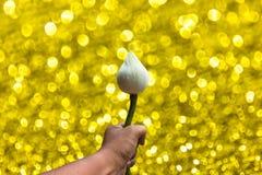 Kopiertes Hintergrund Lotuss in der Hand bokeh Stockbild