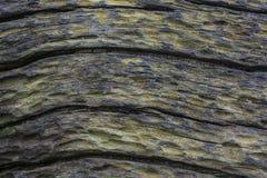 Kopiertes Oberflächen von toten Bäumen Stockfotografie
