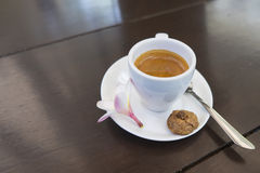 Kopp av espressokaffe, Kopi Luwak Bali, Indonesien Royaltyfri Fotografi