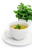 Kopp av grönt te med mintkaramellen, närbild, selektiv fokus royaltyfria foton