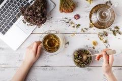 Kopp av sunt te, honung som läker örter, örttesortimentet och bär på tabellen Top beskådar som behandling för perforatum för medi Arkivbild