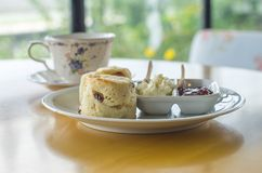 Kopp för vitt kaffe för ` med det lilla trädet och den lilla dockan Royaltyfri Fotografi