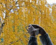 Kopp i händer på en bakgrund av höstgulingträ arkivbilder
