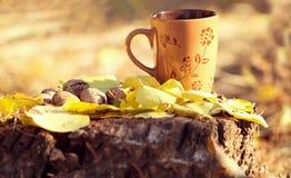 Kopp och valnötter på en stubbe i hösten Arkivbild